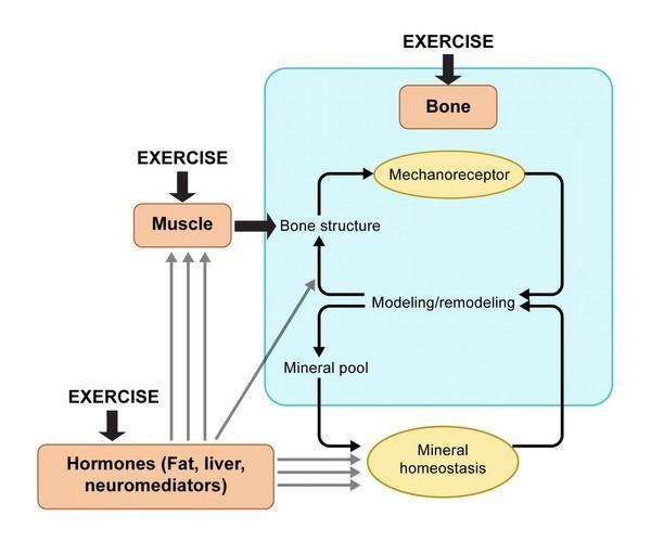 білохіміческіе процеси