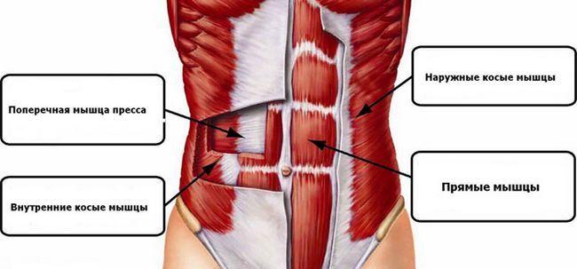 Що варто знати про поперечної м`язі живота?