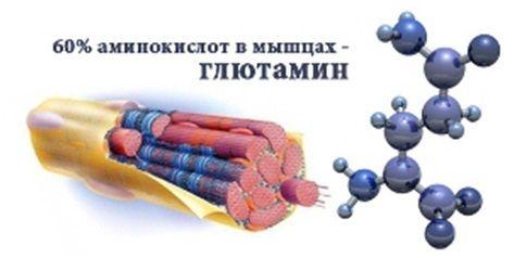 glutamin-cepb