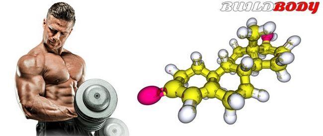 Глобулін, що зв`язує статеві гормони (гзсг) - опис, функції