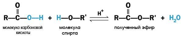 Проста хімічна реакція отримання ефіру