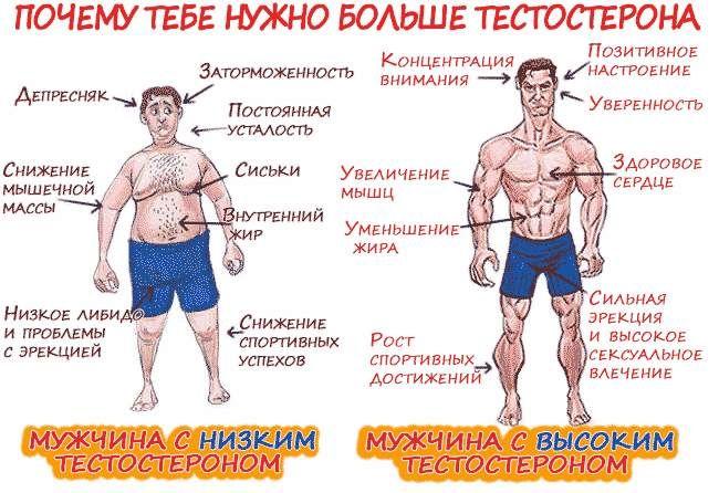 Чому потрібен тестостерон