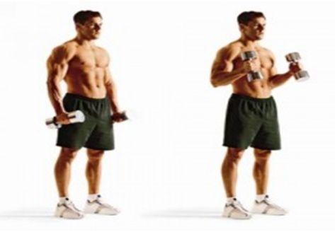 biceps-molot
