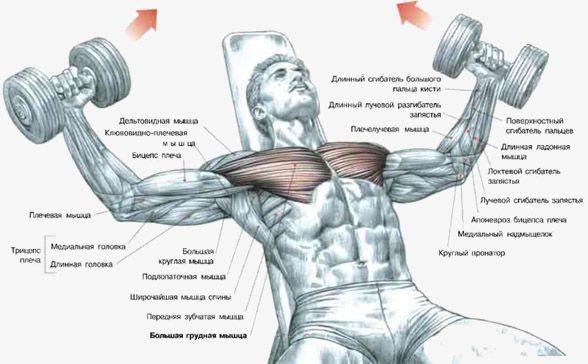 Як прокачати грудні м`язи за 5 хвилин?