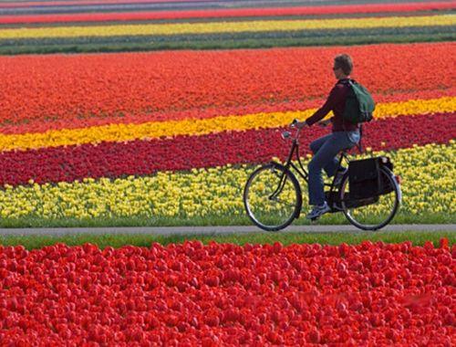 Амстердам - велосипедний місто