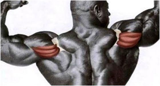 Задній пучок дельт