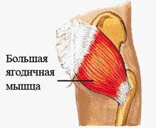Велика сідничний м`яз