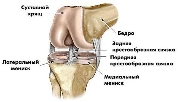 будова коліна