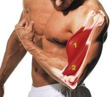 Основна група м`язів вправи-Підйом штанги на біцепс широким хватом