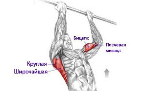 turnik-na-biceps
