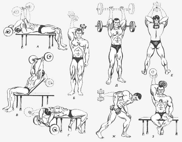 Найкращі вправи на всі групи м`язів