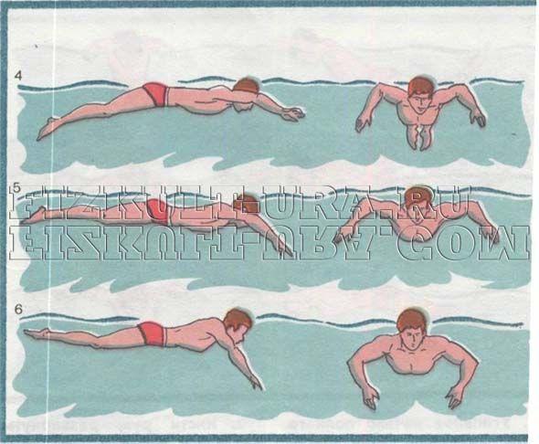Техніка плавання батерфляєм