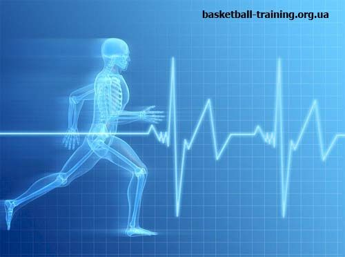 Тренування і розвиток витривалості