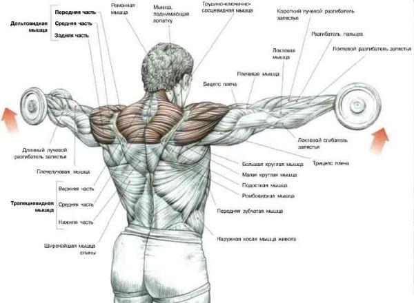 Треніовка плечей