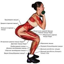 м`язи ніг
