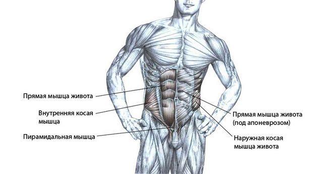 М`язи черевного преса