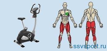 Велотренажер - які м`язи працюють