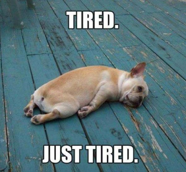 Втомлений песик.